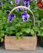 The Maine Bucket Company Pansy Box--8x4x6.5 Natural Pansy Box /w Handle