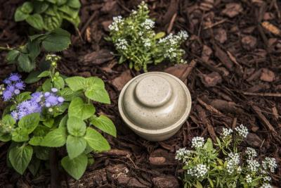 Mini Urn (Biodegradable) by Paw Pods - Urn Only